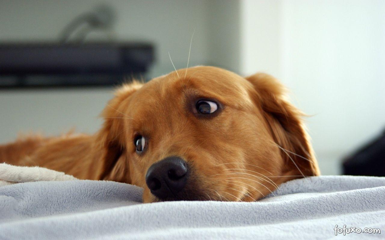 Brincando com o seu cão: Esconde-esconde