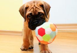 Como divertir seu cão dentro de casa