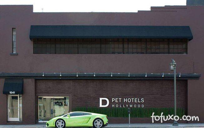 Dicas para escolher o hotel do seu cão