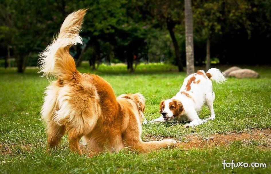 Brincando com o seu cão: Cabo de Guerra