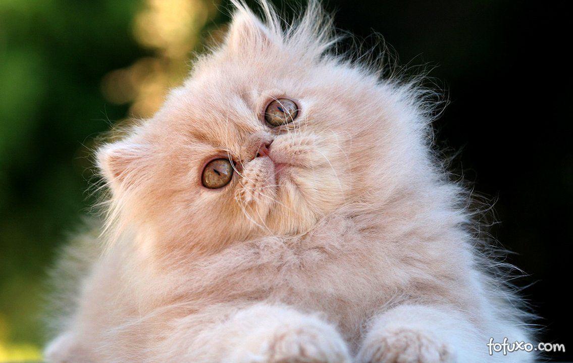 Saiba como os gatos foram domesticados
