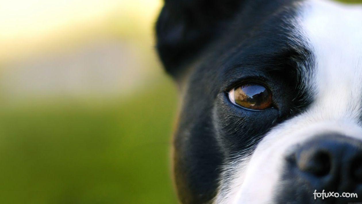 Identificando problemas de visão em cães e gatos