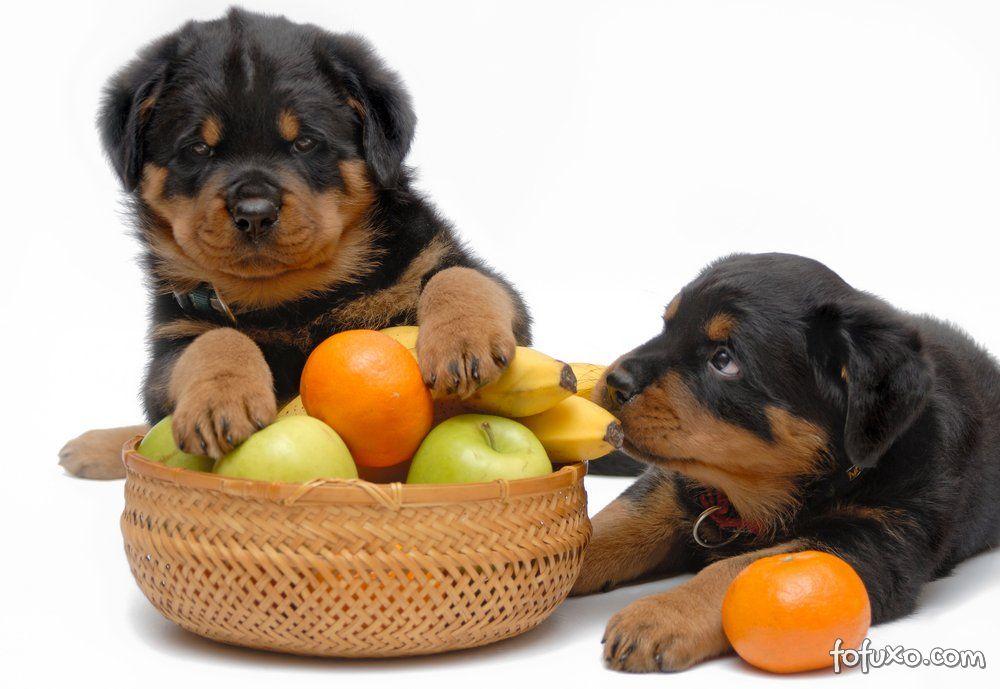 Cuidados com as frutas para os seus cães