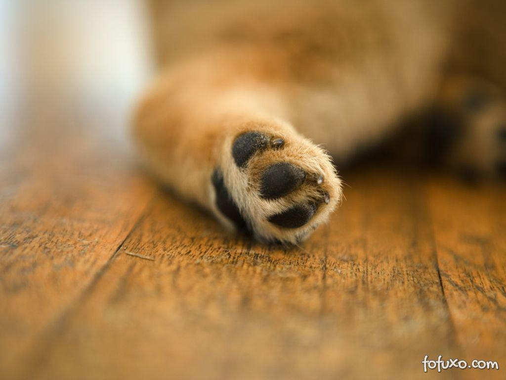 Como limpar as patas dos cachorros