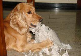 Por que os cachorros são bagunceiros?
