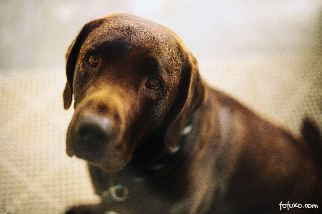 Saiba mais sobre a depressão canina