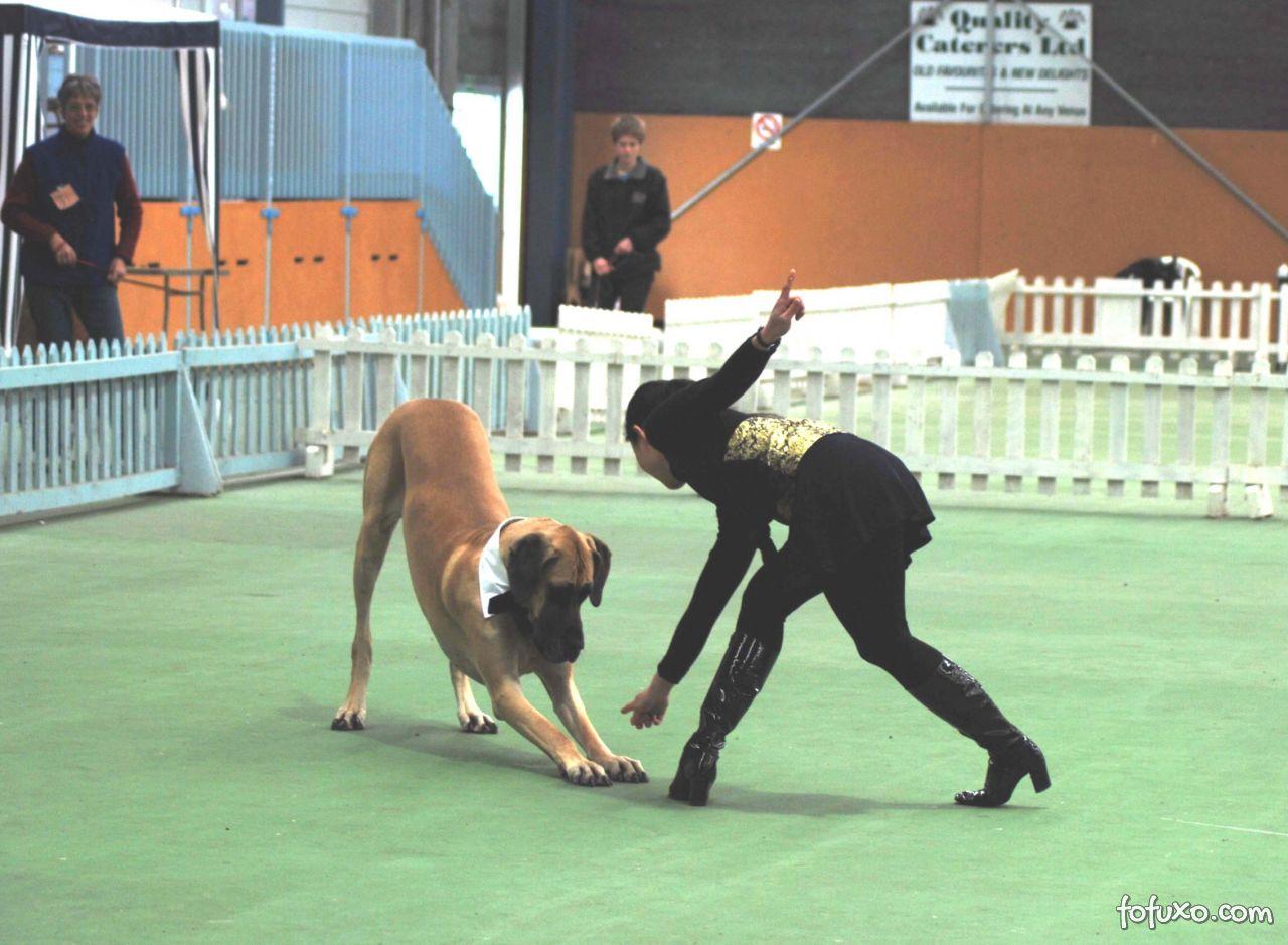 Conheça o Canine Freestyle