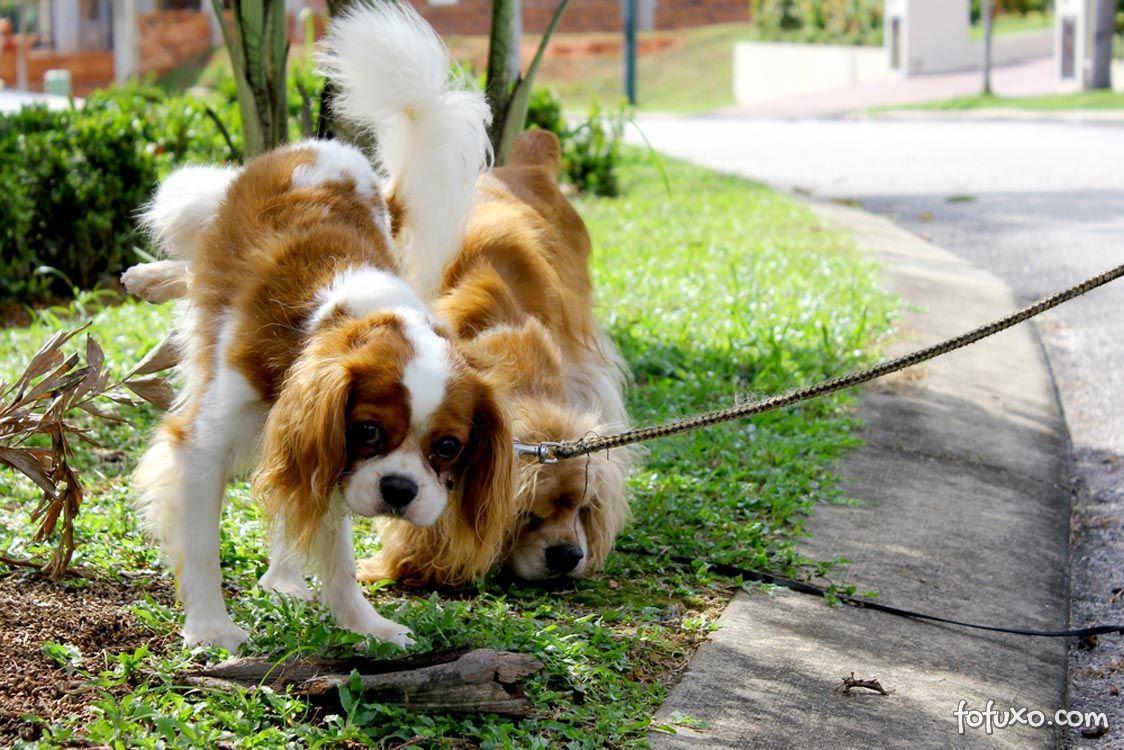 Donos que recolhem dejetos dos animais contribuem para o controle de doenças