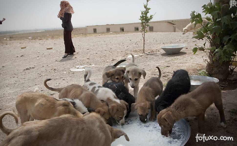 Cachorro são perseguidos pelo regime do Irã