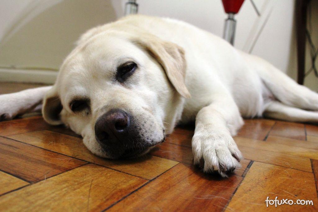 Calmantes para cachorros