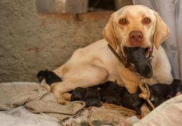 Cachorros são resgatados depois de serem enterrados vivos