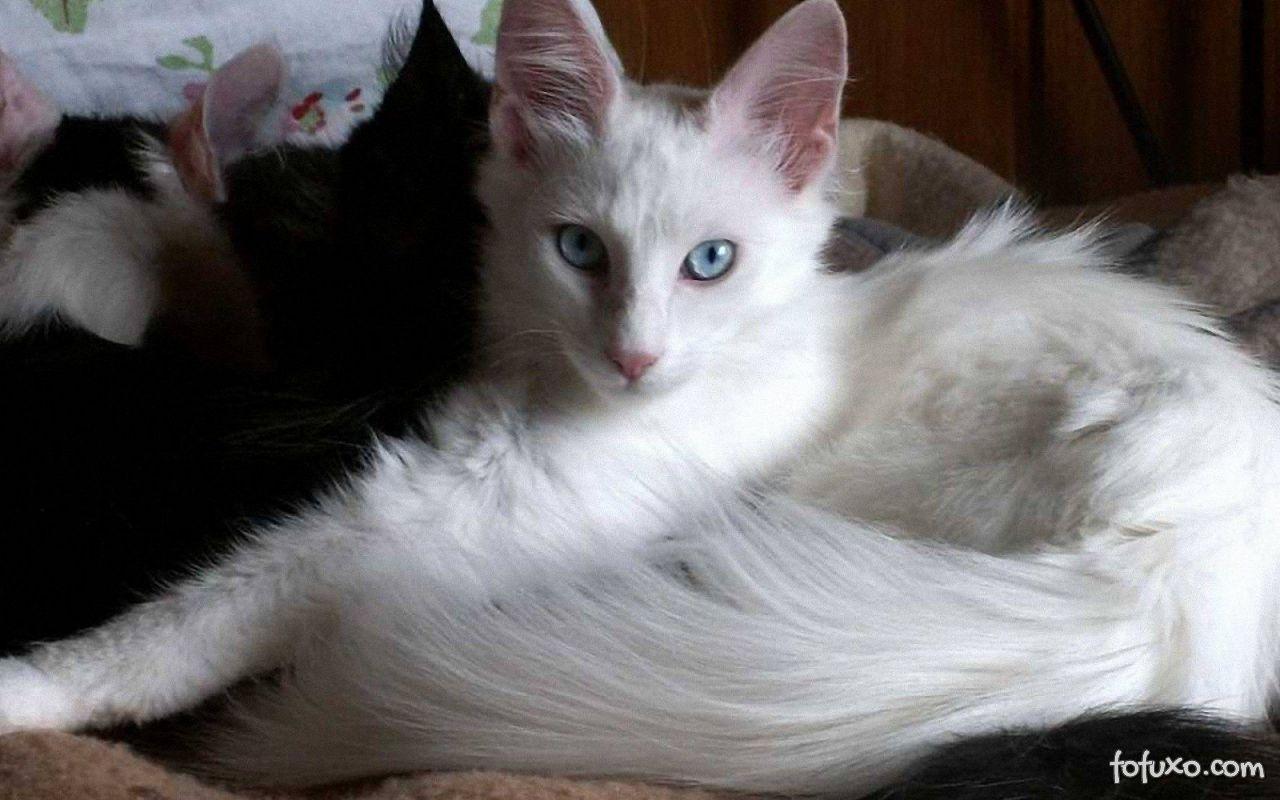 Os cuidados especiais com os gatos brancos