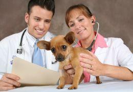 Empresa lança aplicativo para veterinários