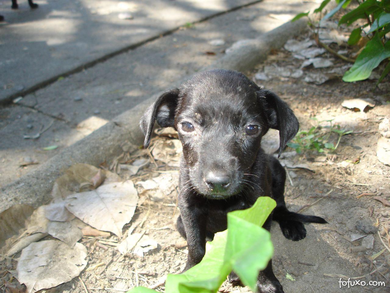 Dicas para ajudar cães abandonados