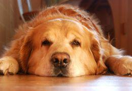 Dicas para dar remédio líquido para o seu cachorro