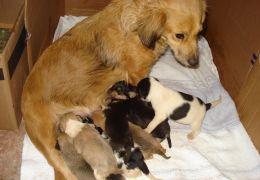 Alimentos para cães recém-nascidos