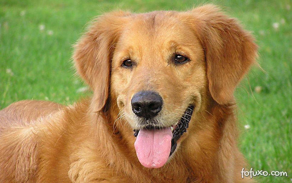Pesquisador afirma que cachorros são mais inteligentes do que imaginamos