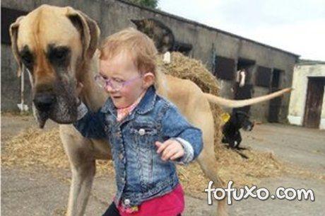 Cão irlandês prevê ataques epilépticos em menina antes deles acontecerem