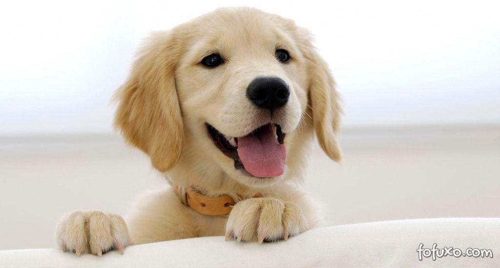 Dicas simples para manter o seu cão saudável e feliz