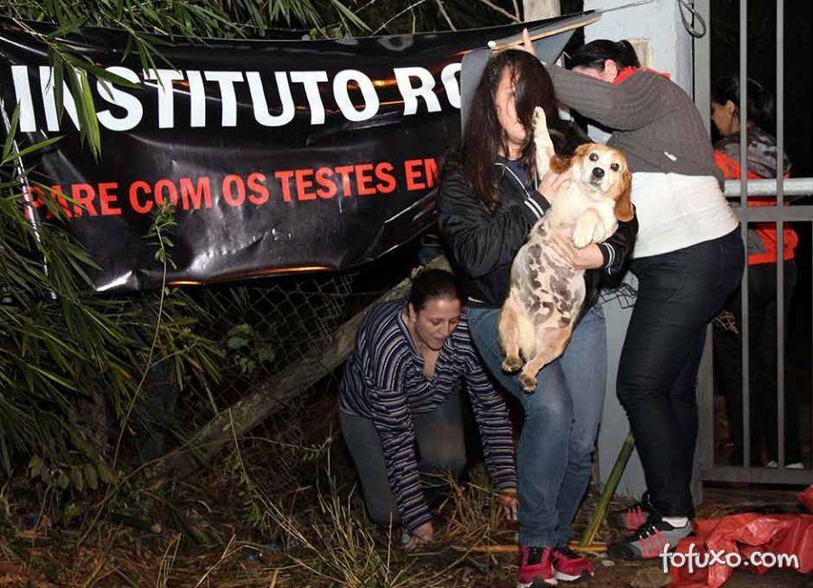 Ativistas resgatam animais de instituto acusado de maus tratos