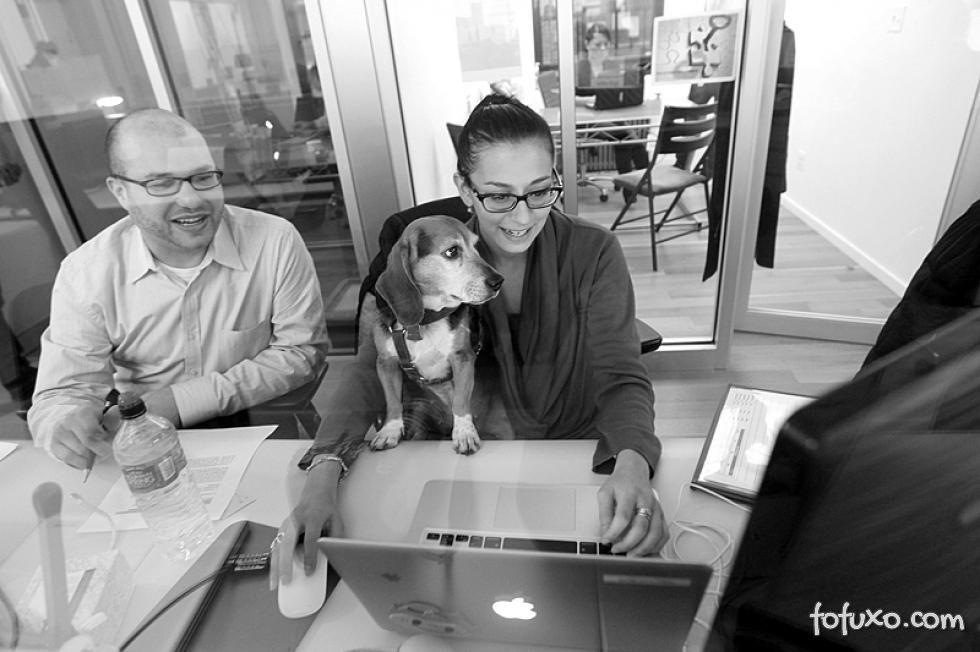 Empresas adotam dia de levar animais para o escritório: o Pet Day