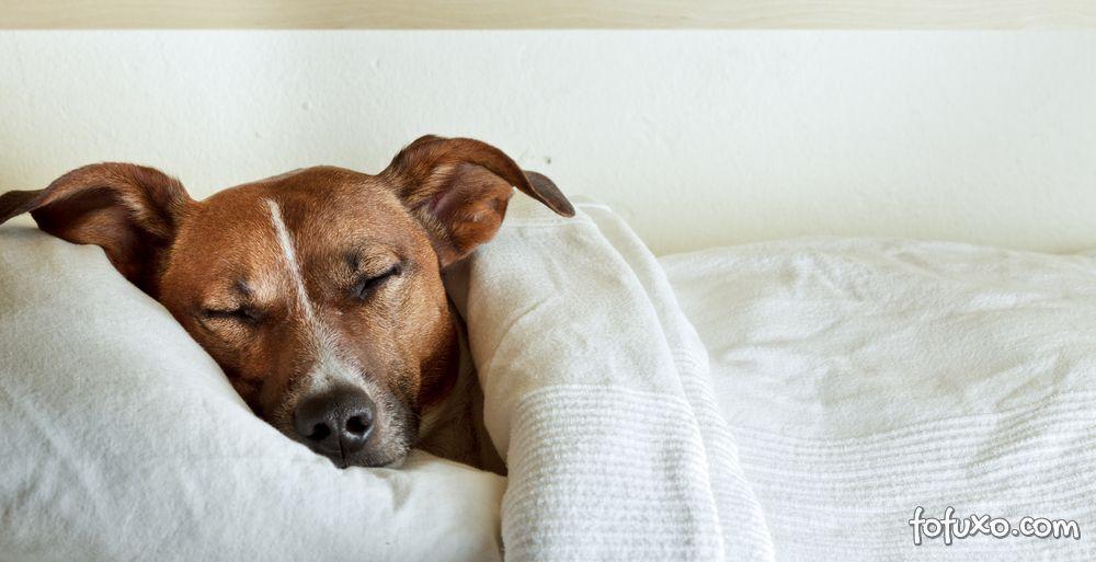 Dicas para saber se o seu cachorro está com febre