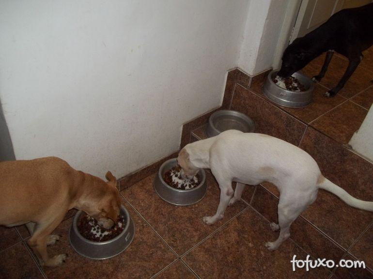 O que fazer quando o cachorro para de comer ração?