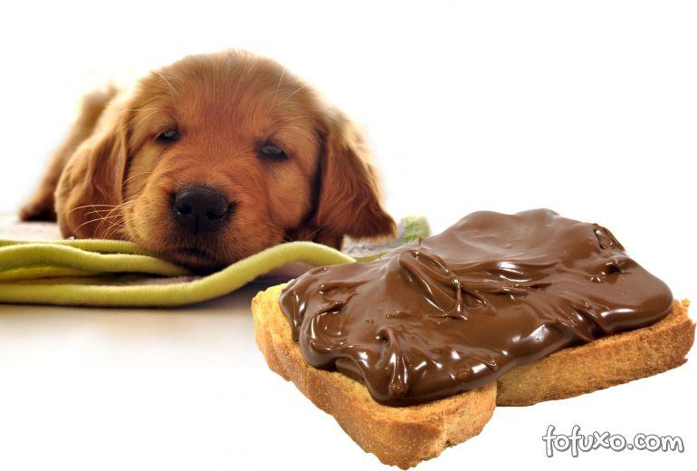 Os piores alimentos para os cachorros