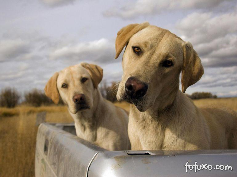 Saiba o que fazer para o seu cão não enjoar dentro do carro