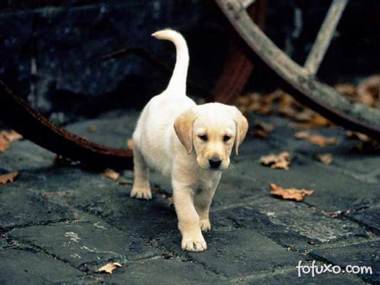 Pesquisa tenta entender o cachorro pelo movimento do rabo