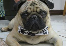 Crescem o número de franquias dedicadas ao mercado Pet