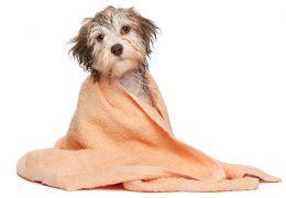 Pet shops terão que gravar todo processo de banho e tosa dos animais