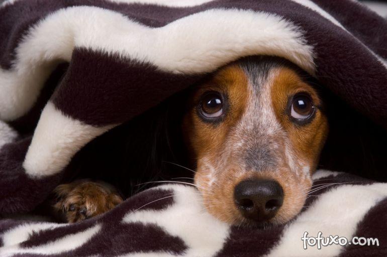 O que fazer com o medo de chuva e temporais dos cães