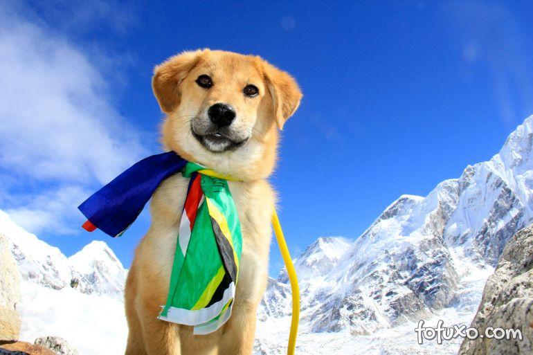 Conheça Rupee, o cão alpinista