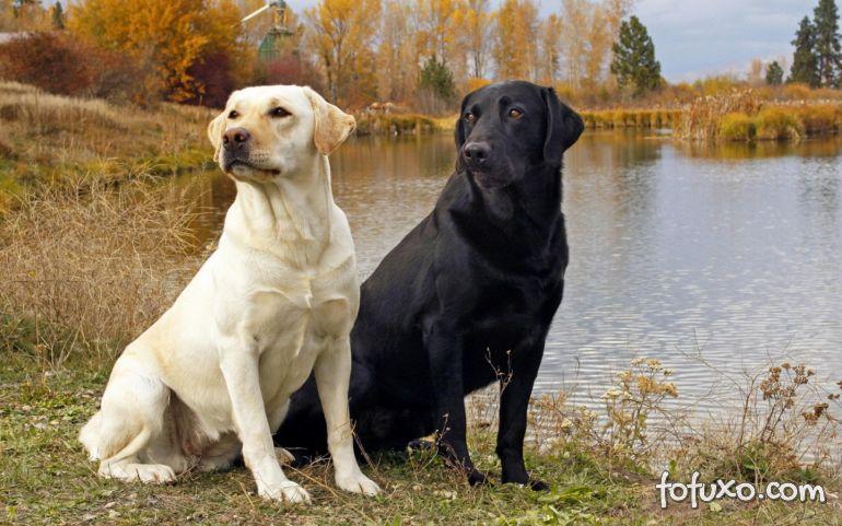 Cachorros seriam segunda espécie mais bem sucedida do planeta