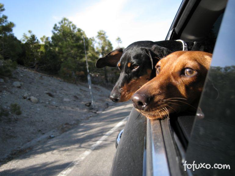 Dicas para viajar com o cachorro no verão