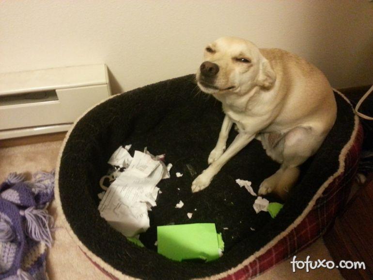 Cachorros podem sentir inveja, culpa e vergonha