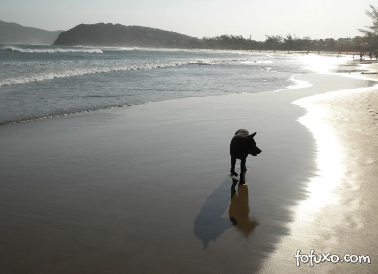 Levar ou não levar o seu cão para praia?