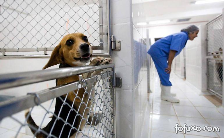 Provas dos maus-tratos contra os animais ainda não apareceram no Caso Royal