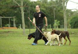 Conheça os segredos do Encantador de Cães Brasileiro