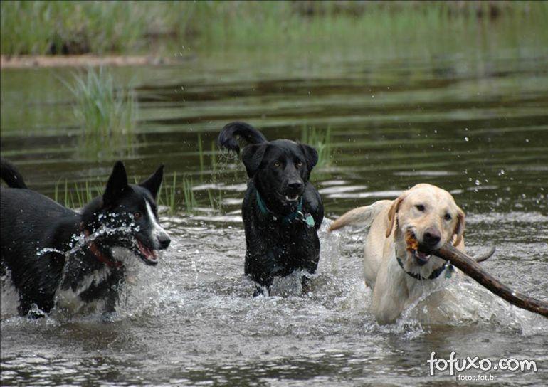 Cuide do seu cão nos dias mais quentes do ano