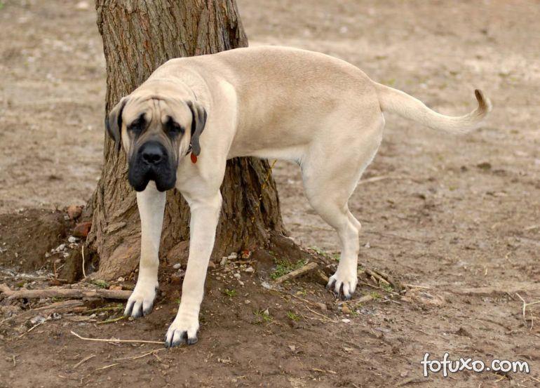 O que fazer quando o cachorro adulto não para de urinar na casa inteira?