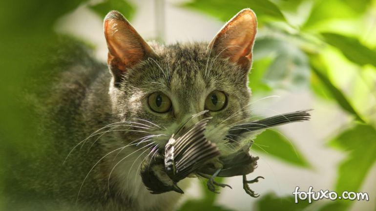 Dicas de alimentação natural para o seu gato