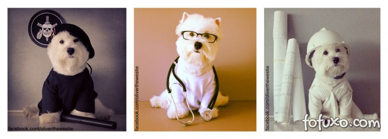 West Highland Terrier vira sucesso nas redes sociais