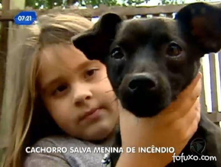 Cachorro salva menina