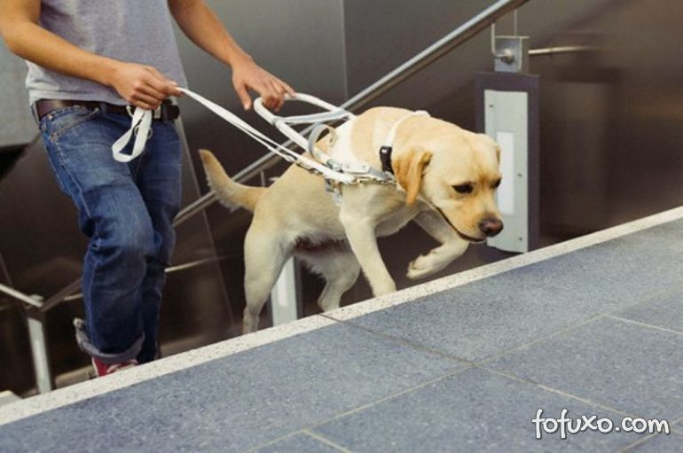 Como conseguir um cão-guia no Brasil?