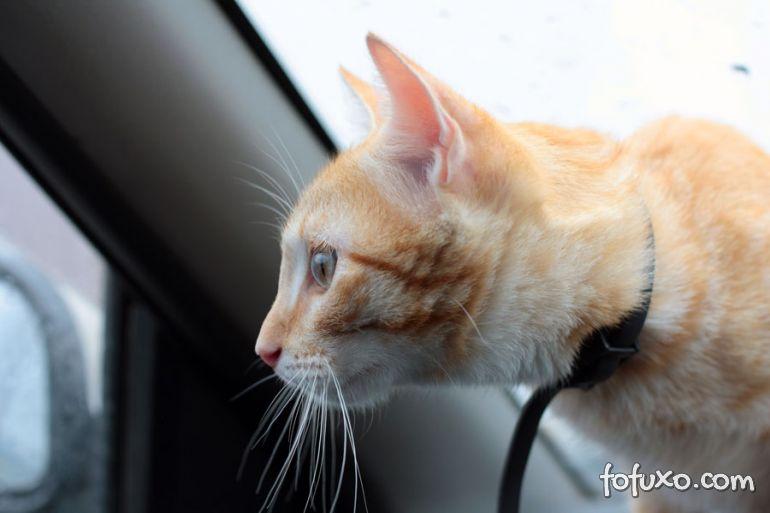 Dicas de viagem com o seu gato
