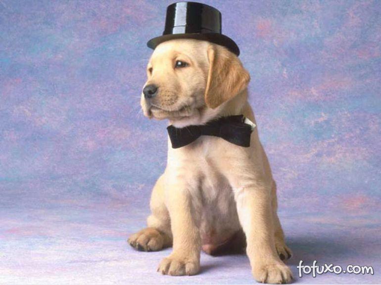 """Pesquisadora afirma que pessoas fazem mal ao tratar cães como """"pequenas pessoas"""""""