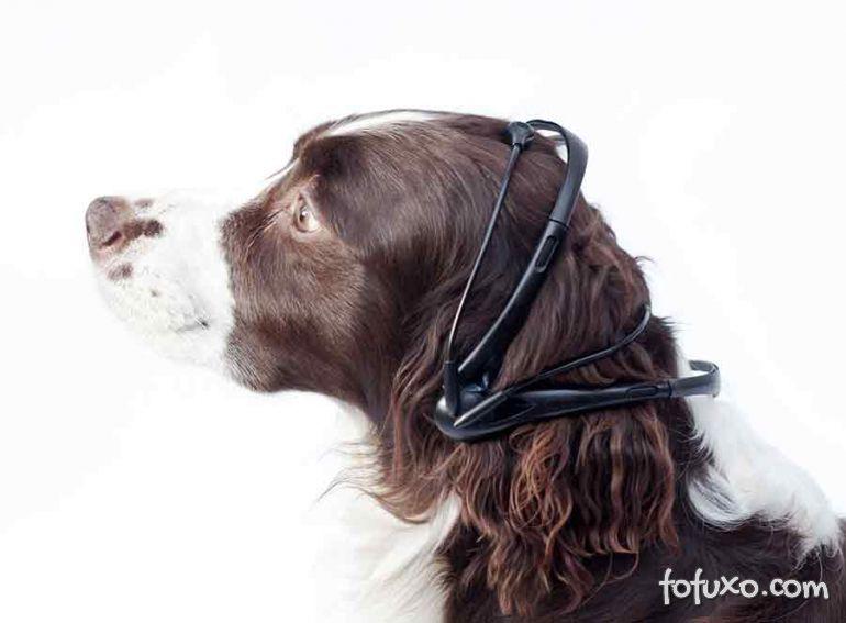 Aparelho promete traduzir latidos e pensamentos dos cães