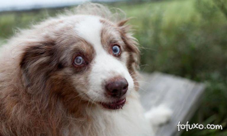 Mudanças de comportamento em cães idosos